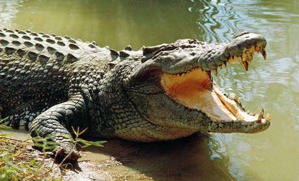 Sortir les crocs !