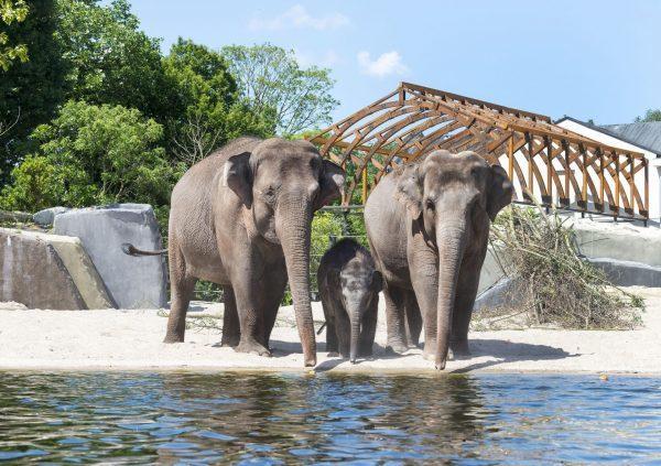 Un éléphant ça trompe énormément !